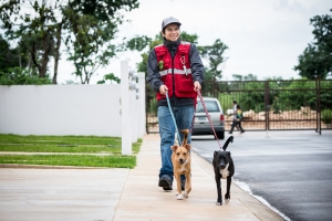 Care-free walking with the EZ Dog Walker's Vest.